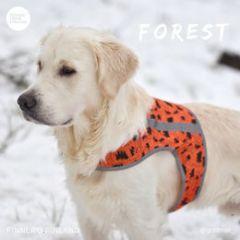 FOREST huomioliivi koiralle XXXL oranssi
