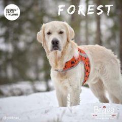 FOREST huomioliivi koiralle L oranssi