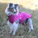 Sport brava takki pinkki koko 65cm